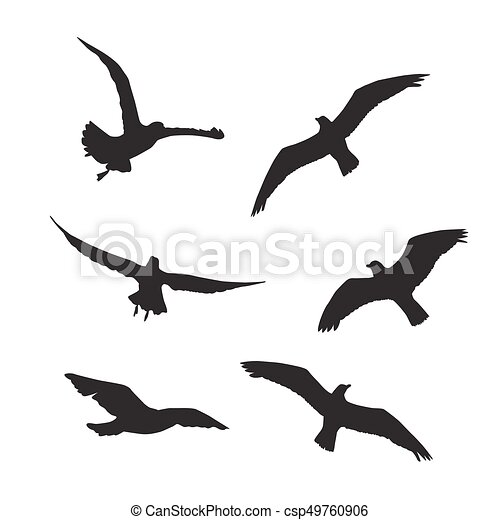Seagull Set Silhouettes on the white background - csp49760906
