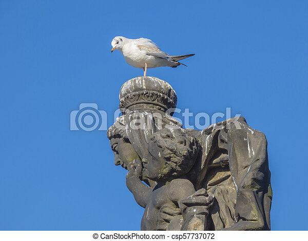 Seagull sitting on stone statue head - csp57737072