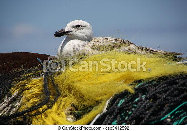Seagull sitting - csp3412592