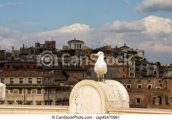 seagull standing in front of Rome - csp45470961