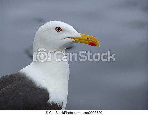 Seagull - csp0003620