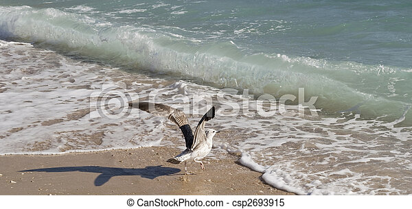 Seagull taking off - csp2693915