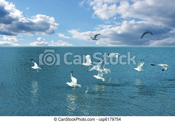 Seagulls and water - csp6179754