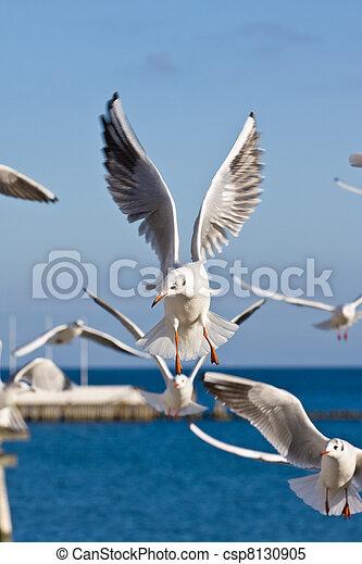 seagulls at pier - csp8130905