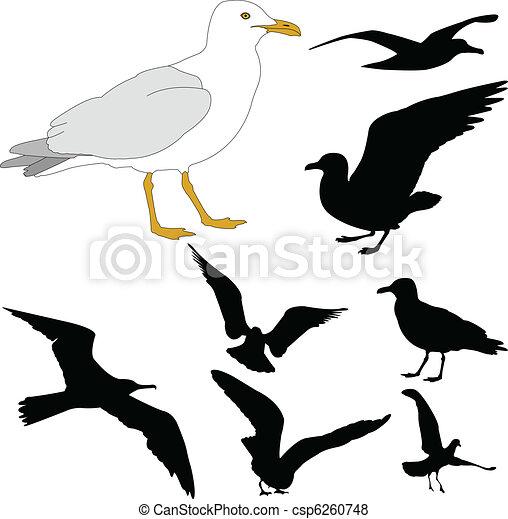 Seagulls - csp6260748