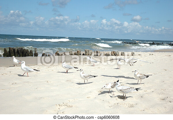 seagulls on the beach - csp6060608