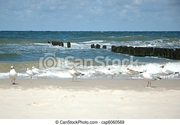 seagulls on the beach - csp6060569