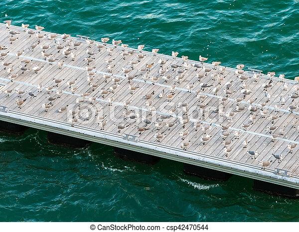 Seagulls on the Pier - csp42470544