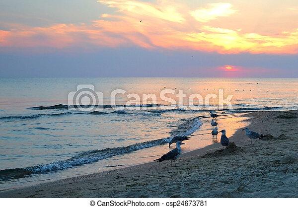 seagulls on the seashore. sunset. - csp24673781