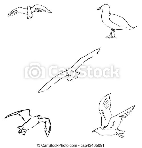 Seagulls sketch. Pencil drawing by hand. Vector - csp43405091
