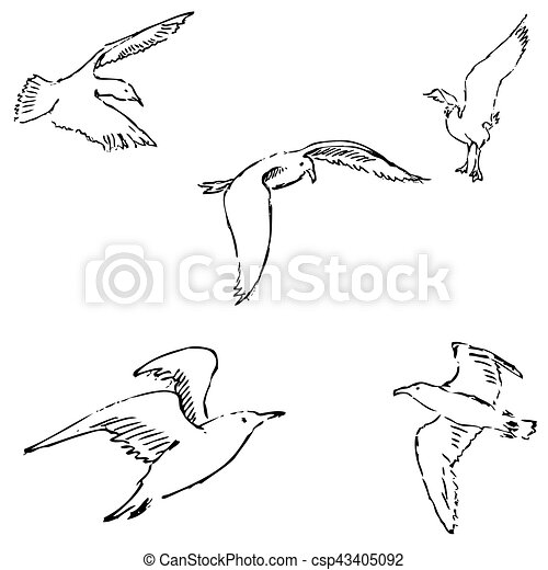Seagulls sketch. Pencil drawing by hand. Vector - csp43405092