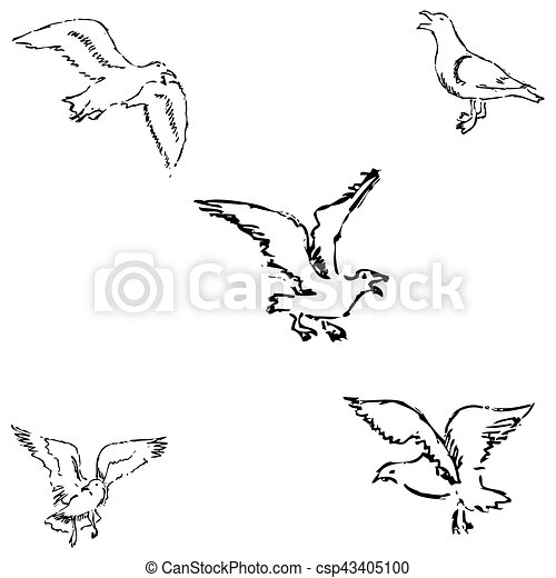 Seagulls sketch. Pencil drawing by hand. Vector - csp43405100