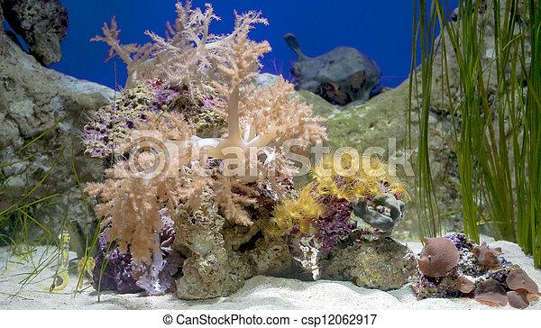 Caballo de mar - csp12062917