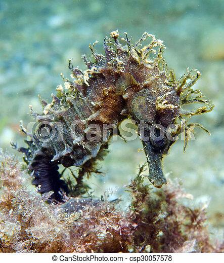 Caballo de mar - csp30057578