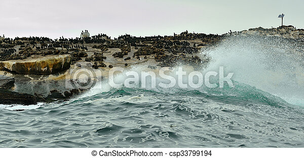 Seal Island, located in False Bay near SImon's Town, South Africa, is a favorite hunting ground for great white sharks. - csp33799194