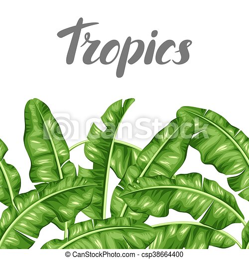 seamless border with banana leaves image of decorative vector rh canstockphoto com Tropical Leaf Clip Art Tropical Shell Clip Art