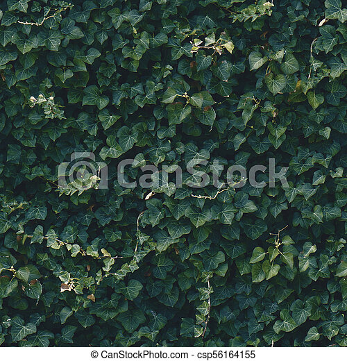Seamless Dark Green Ivy Wall Pattern Outdoor Bush In Park