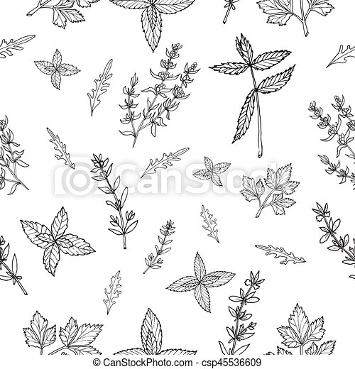 Seamless pattern with herbs - csp45536609