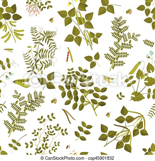 Seamless pattern with legumes plants and its leaves, pods and flowers. Vector illustration. - csp45901832
