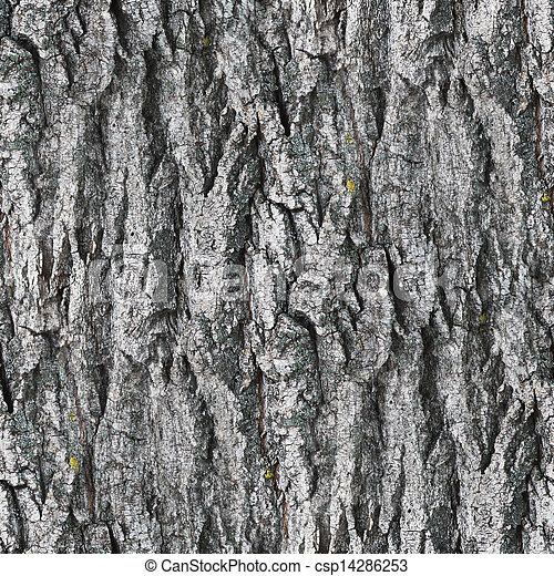 Seamless Texture Gray White Tree Bark Wallpaper Background Your Message