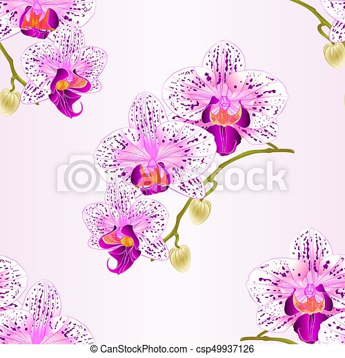 Seamless texture  Orchid purple and white stem with flowers and  buds vintage  vector.eps - csp49937126