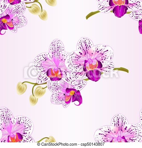 Seamless texture Orchid purple and white stem with flowers and  buds vintage  vector.eps - csp50143807