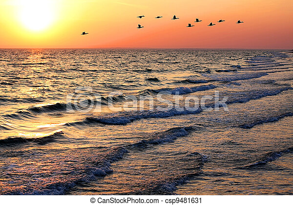 Seascape with ducks at sunset - csp9481631