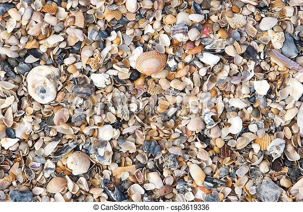 Seashell Background - csp3619336