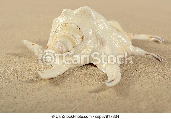 Seashell close-up on a sand - csp57917384