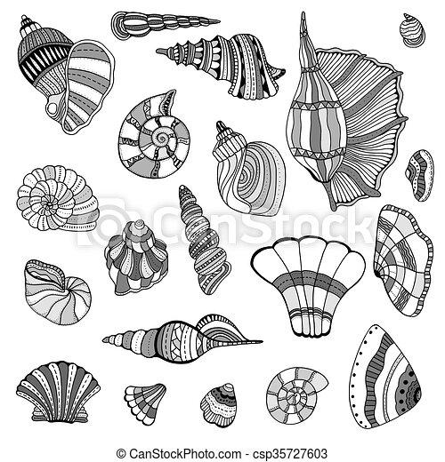seashell, ensemble, collection - csp35727603