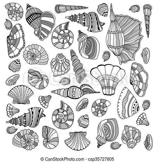 seashell, ensemble, collection - csp35727605