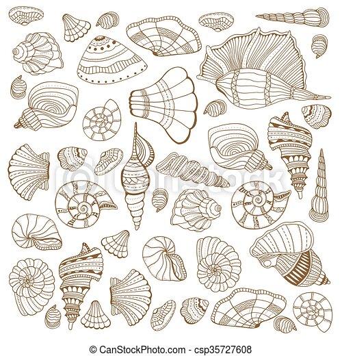 seashell, ensemble, collection - csp35727608