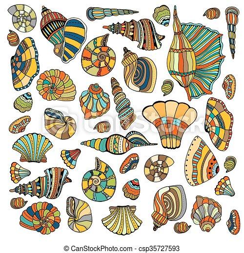 seashell, ensemble, collection - csp35727593