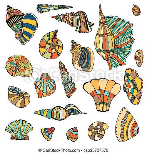 seashell, ensemble, collection - csp35727570