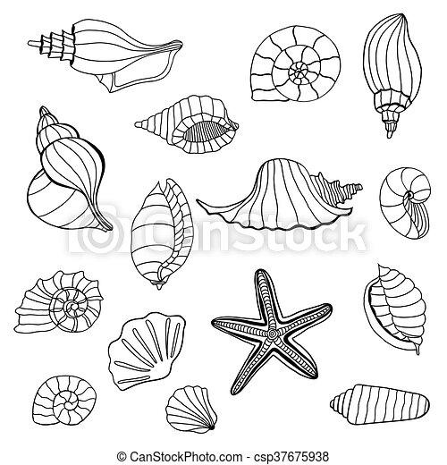 seashell, ensemble, collection. - csp37675938
