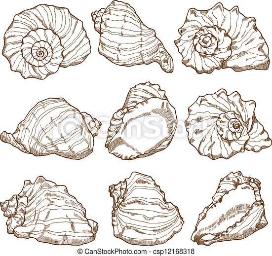 seashell, ensemble, dessin, main - csp12168318