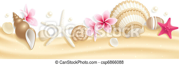 Seashell header - csp6866088