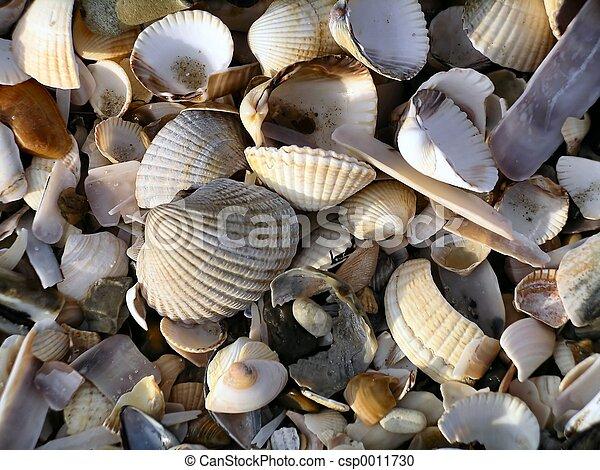 Seashell Jumble I - csp0011730