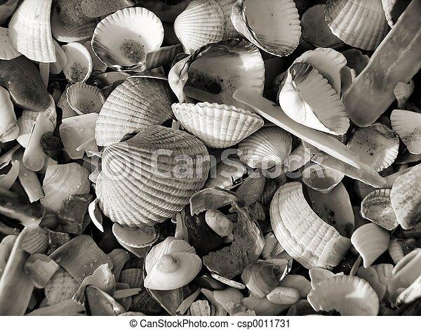 Seashell Jumble II - csp0011731