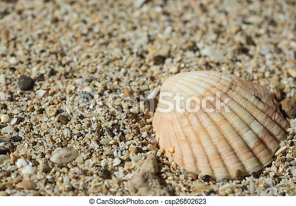 Seashell on sand close up - csp26802623