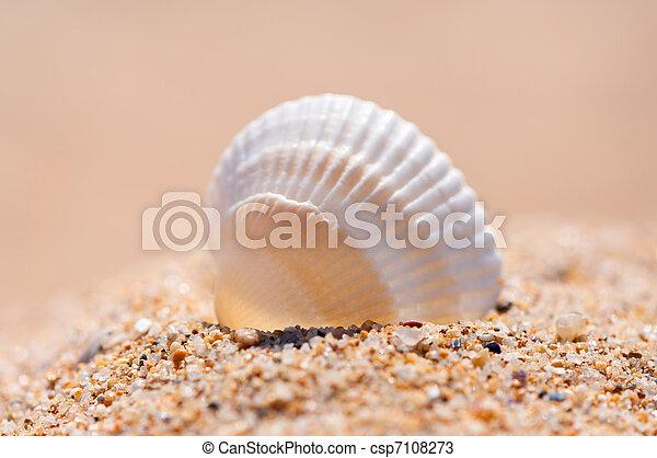 Seashell on sand close up. - csp7108273