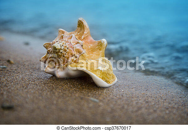 Seashell on sand of the beach in sunlight, background, close up - csp37670017