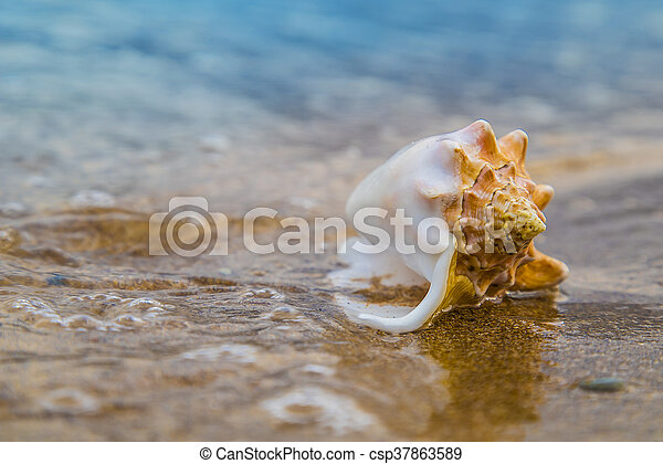 Seashell on sand of the beach in sunlight, background, close up - csp37863589