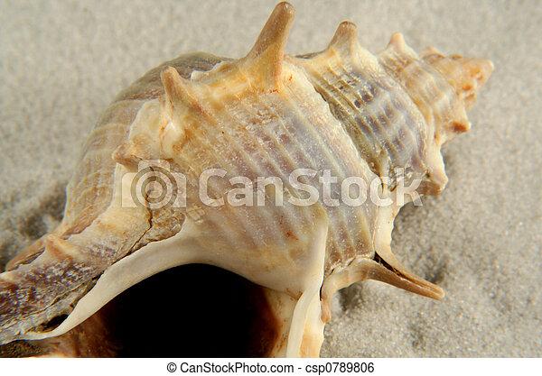 seashell on sand - csp0789806