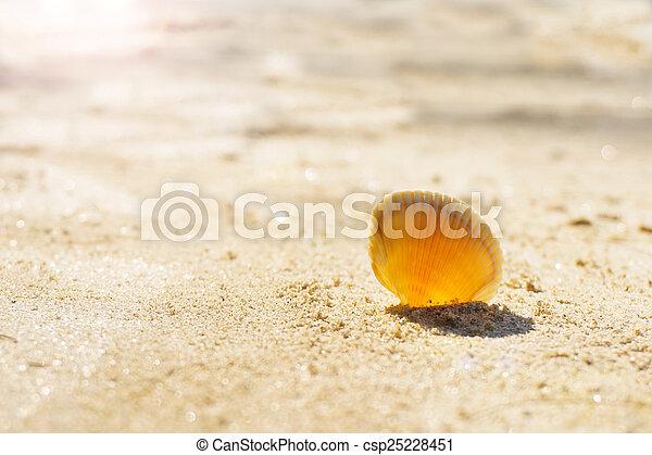 Seashell on sand - csp25228451