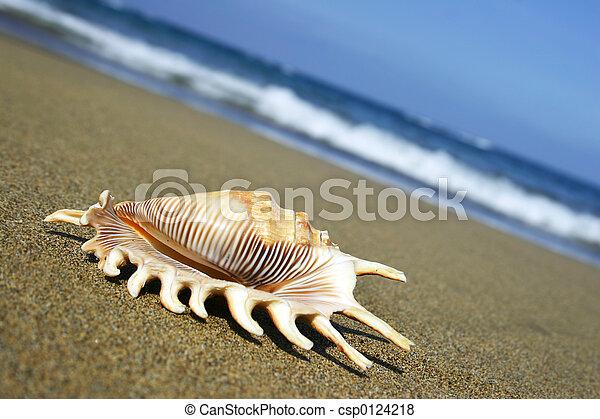Seashell on Shore - csp0124218
