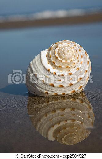 Seashell on the Beach - csp2504527
