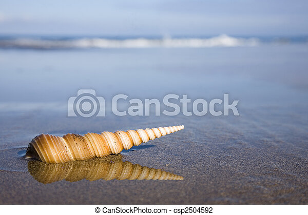 Seashell on the Beach - csp2504592