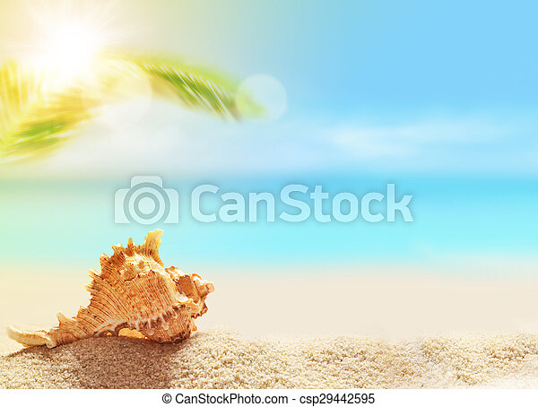 seashell on the sandy beach and palm - csp29442595