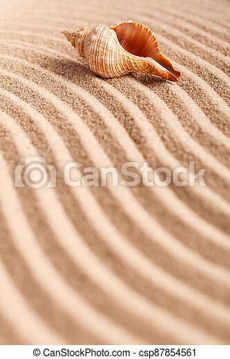 Seashell on the yellow sand on a sunny day. Natural background with place for your text. - csp87854561